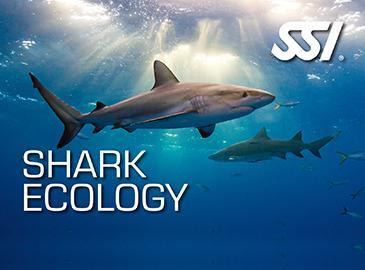 CURSO SHARK ECOLOGY SSI. Consigue tu certificación con Sotamar Shark Tour!!