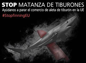 STOP MATANZA DE TIBURONES