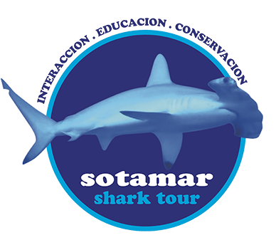 Sotamar Shark Tour